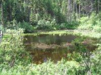 Bear Pot Trail