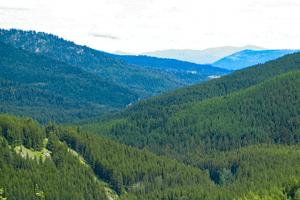 Wapaloosie Trail