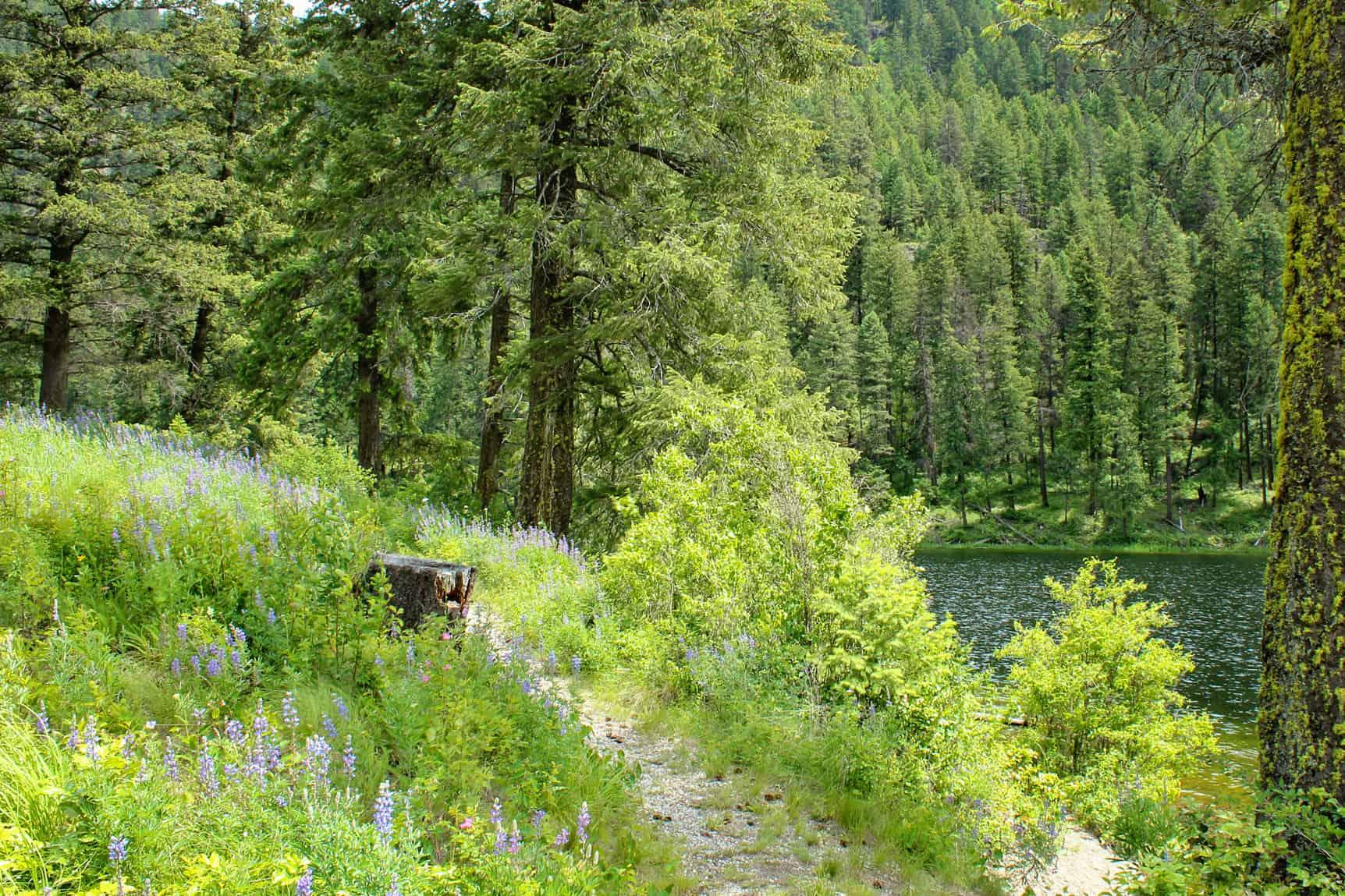 pierre lake trail