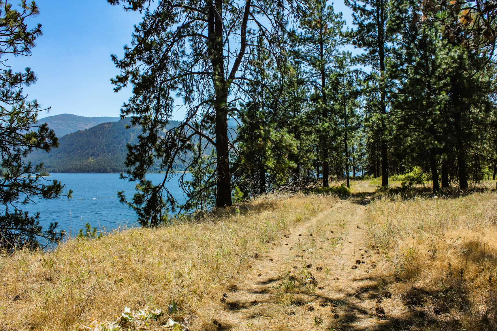 Sherman point loop trail ferry county