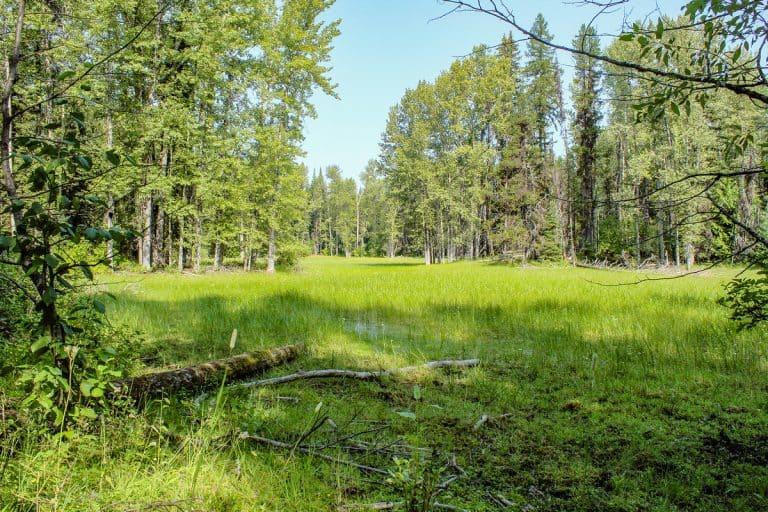 meadow creek trail 16 sm