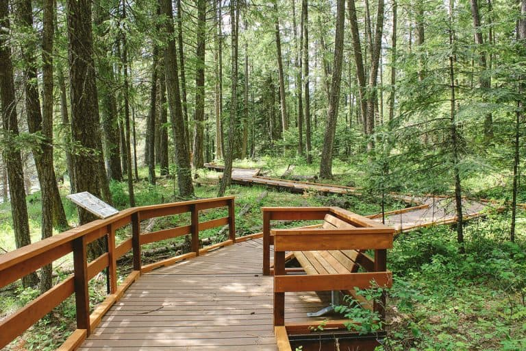 pioneer park trail