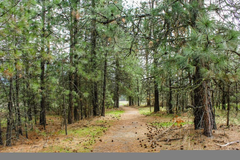 kettle falls campground trail 11
