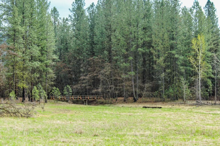 kettle falls campground trail 13