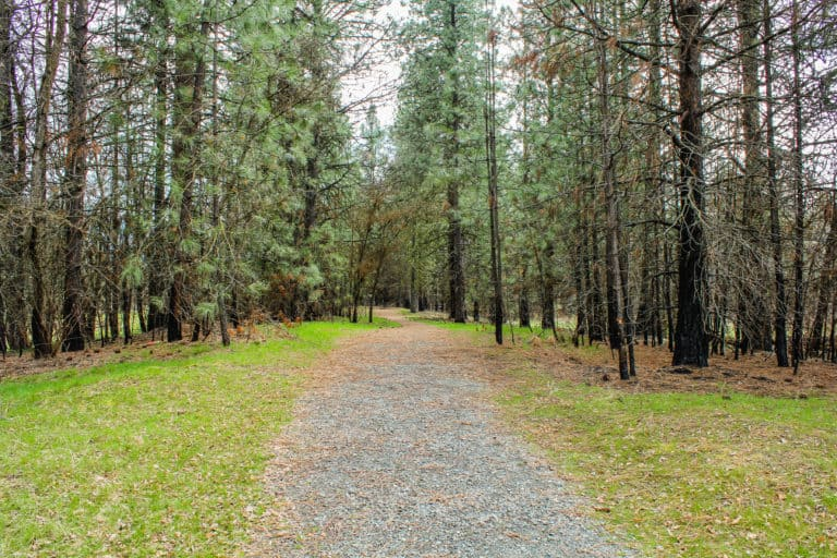 kettle falls campground trail 15