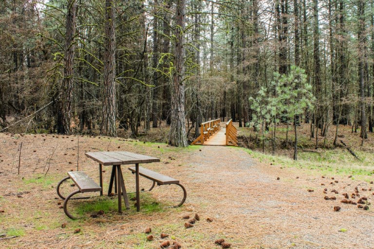 kettle falls campground trail 16