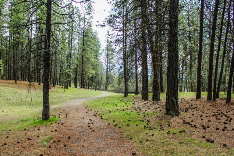 kettle falls campground trail 2