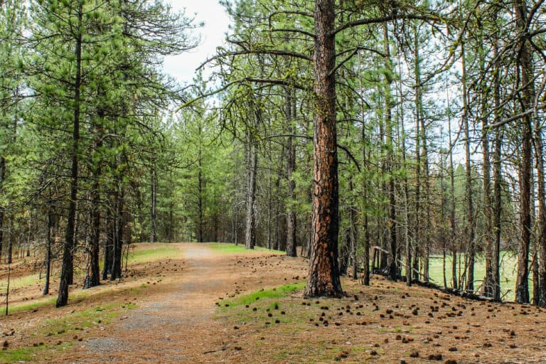 kettle falls campground trail 25
