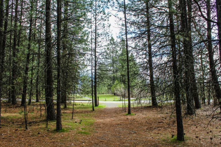 kettle falls campground trail 3