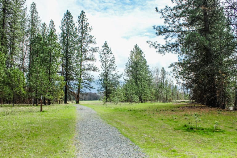 kettle falls campground trail 4