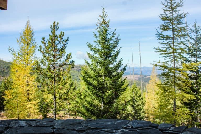 white mountain overlook 5