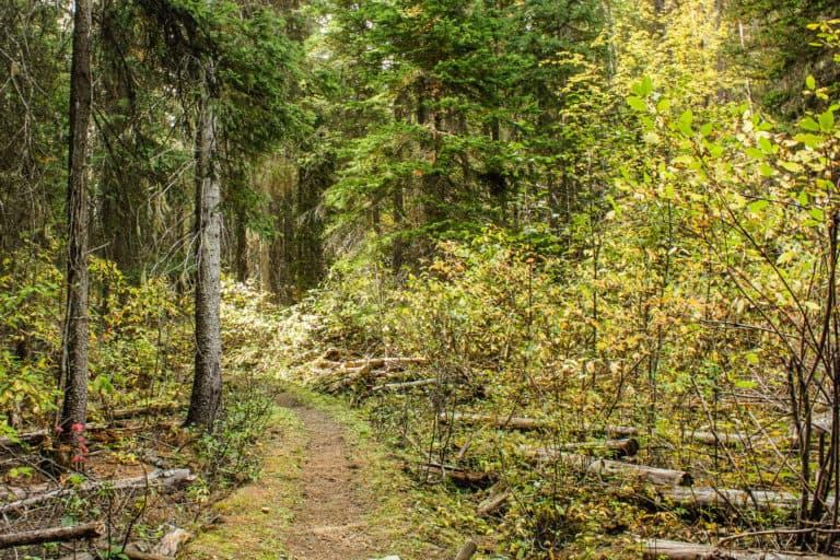 bear pot trail 10