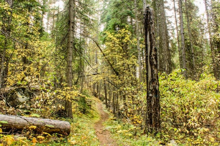 bear pot trail 11