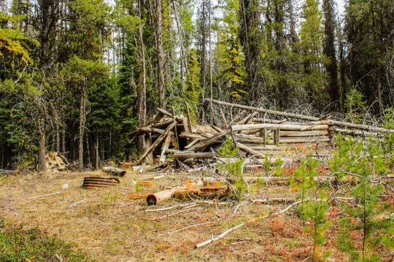 bear pot trail 12