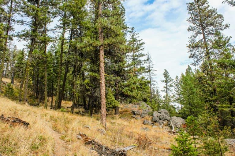 bear pot trail 15