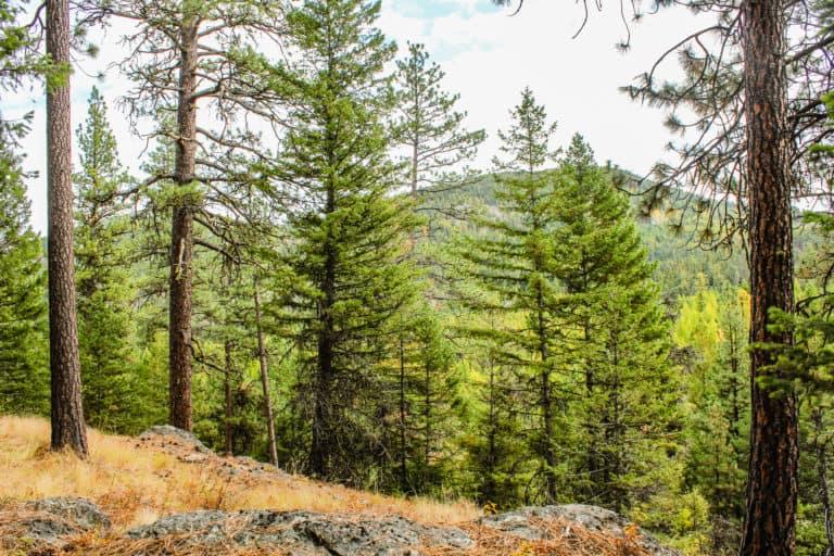 bear pot trail 16