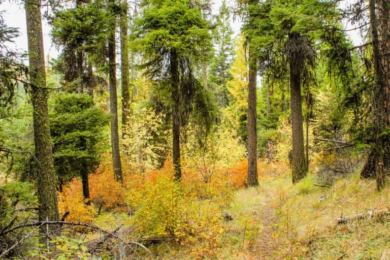 bear pot trail 17