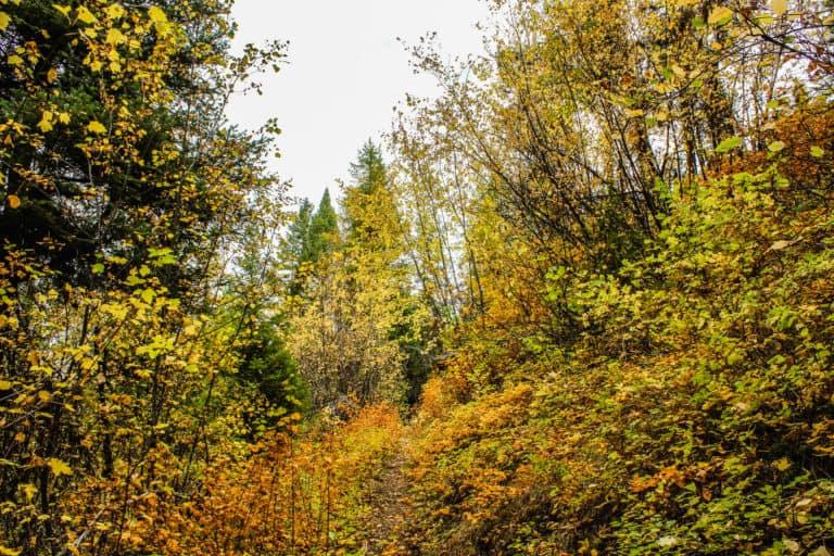 bear pot trail 18