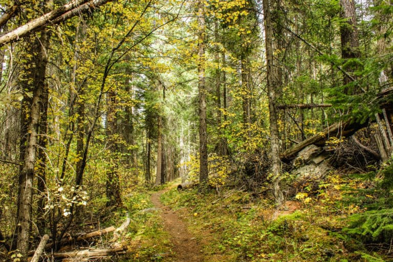 bear pot trail 24