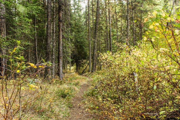 bear pot trail 7