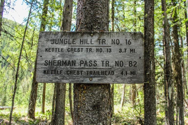 jungle hill