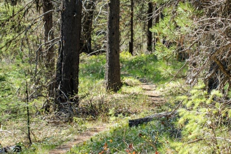 springboard trail 11