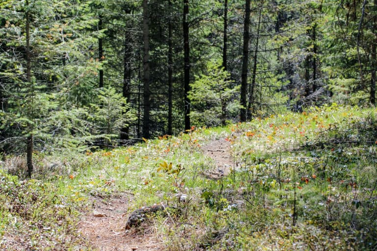 springboard trail 9