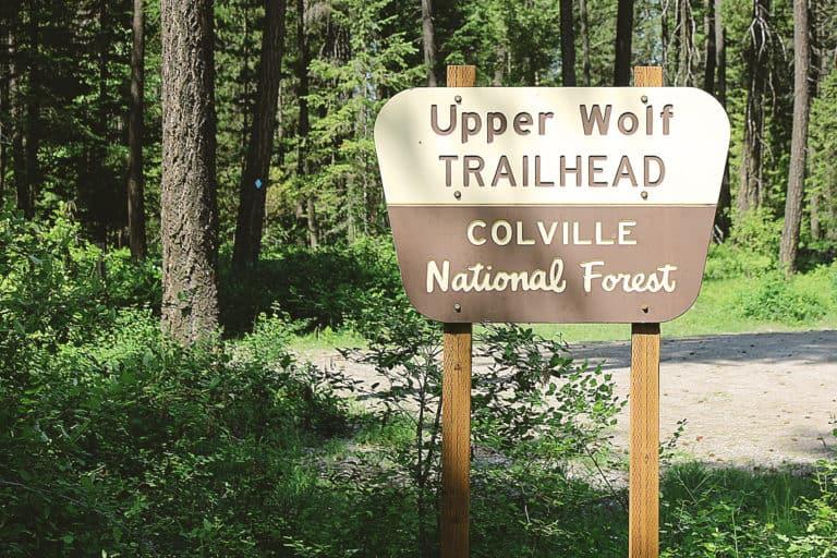 wolf trails 1