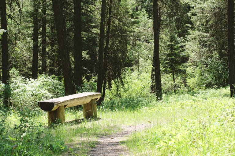 wolf trails 2