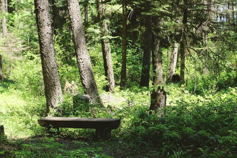 wolf trails 3