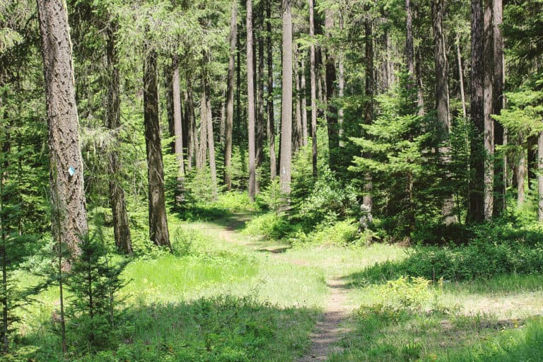 wolf trails 6