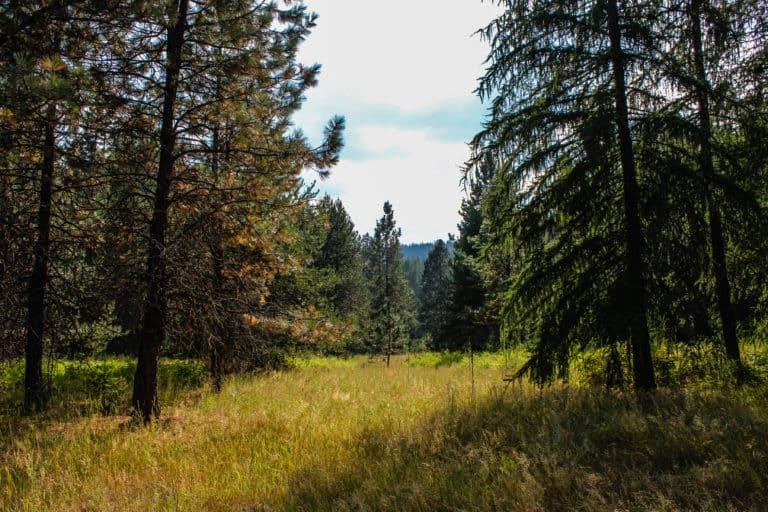 batey bould trail 12