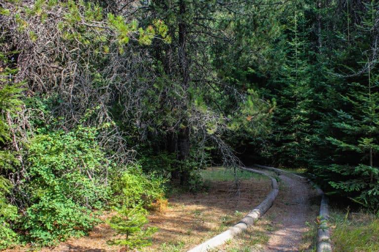 batey bould trail 4