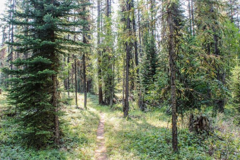 lake leo trail 1